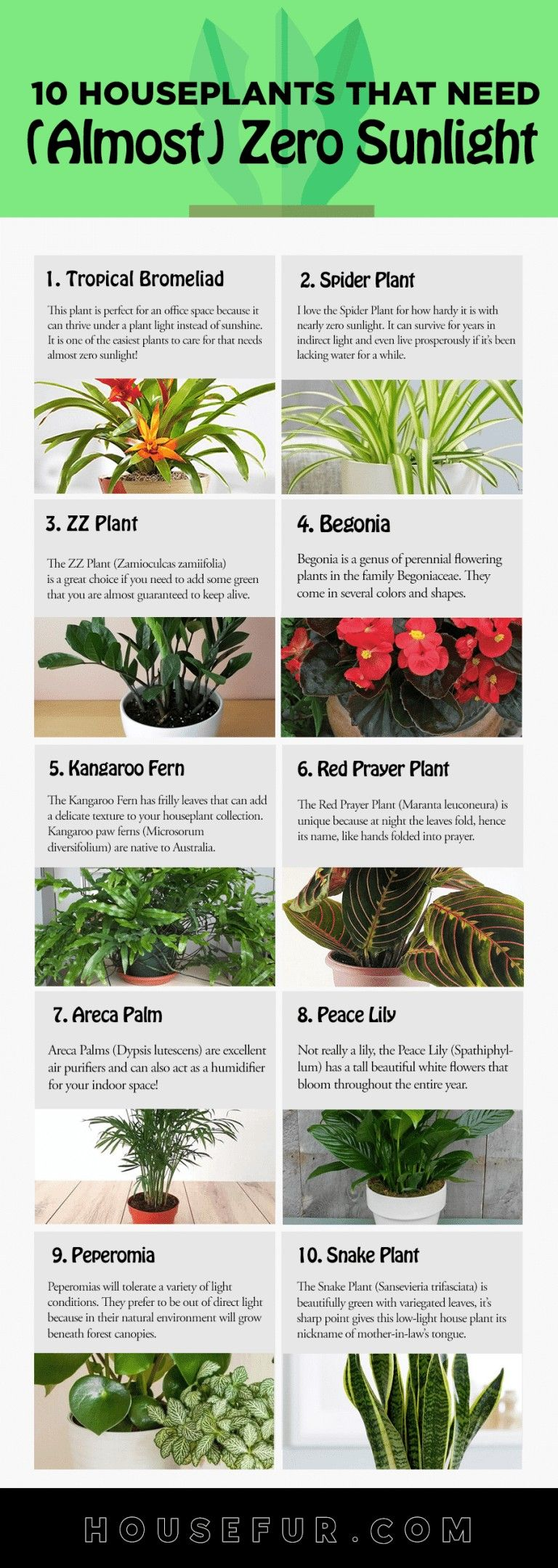 Successful Plants To Keep Indoors That Requires Little To 400 x 300
