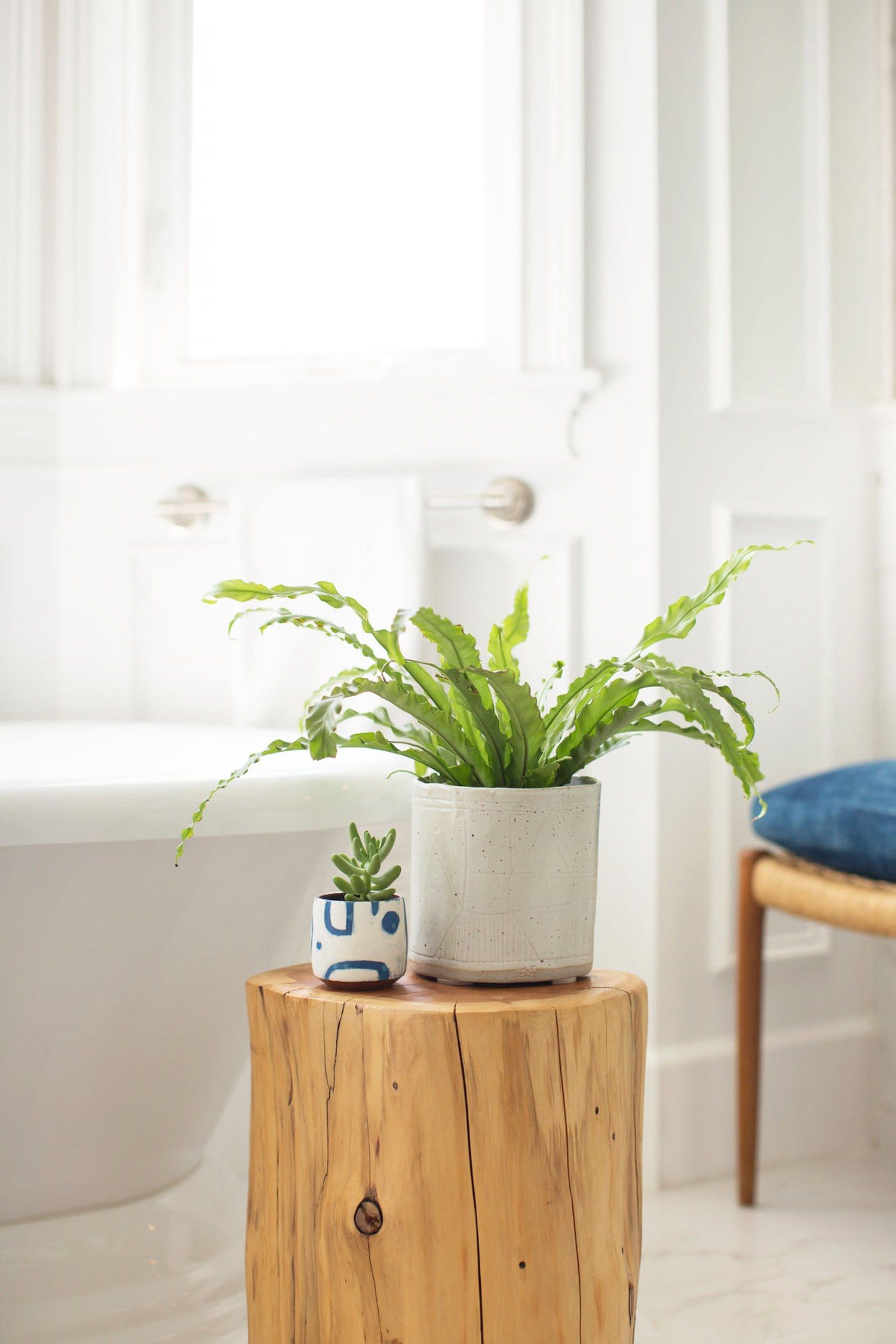 7 AirPurifying Shower Plants Keep Your Bathroom Fresh and