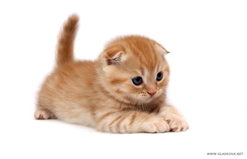 cute kitties007_6
