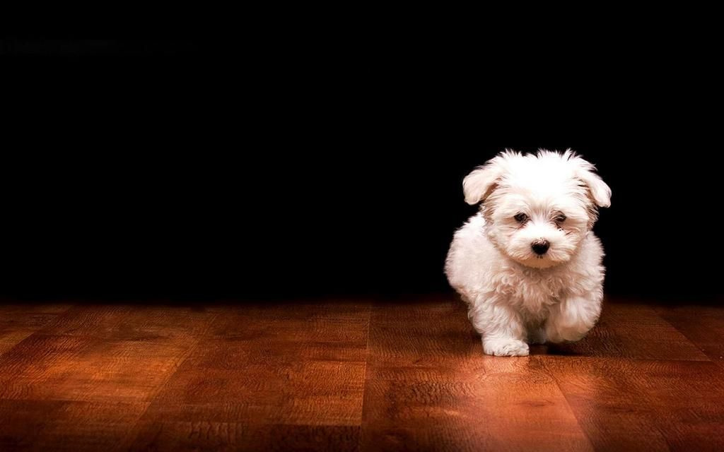 Monica Cates On Twitter Puppy Wallpaper Puppy Backgrounds Cute Dogs