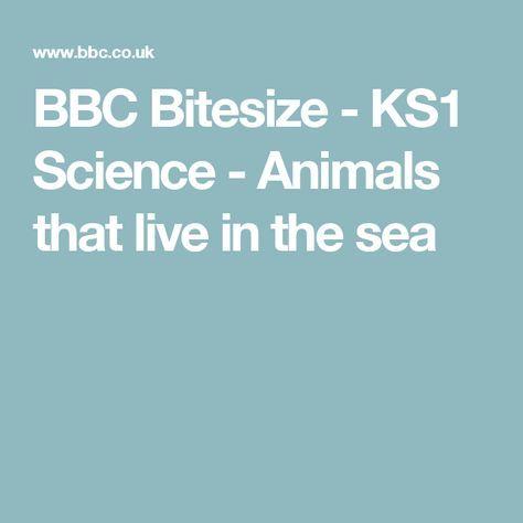 Bbc bitesize ks1 science animals that live in the sea liam explore these ideas and more bbc bitesize urtaz Gallery