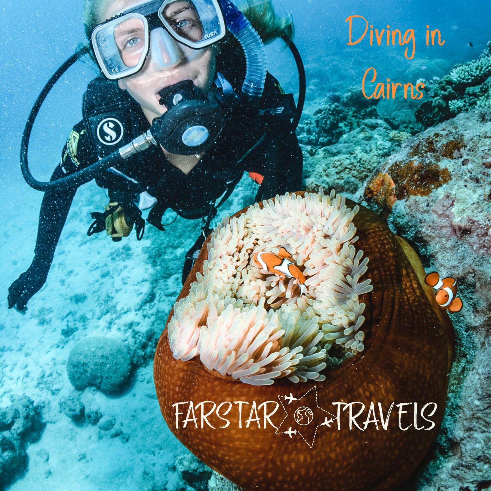 ☆彡 Have you ever been to the Great Barrier Reef in ...
