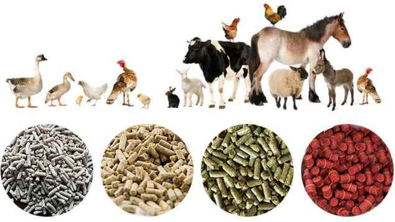 Animal Feed Lesson Plan See, Touch and Do in 2020