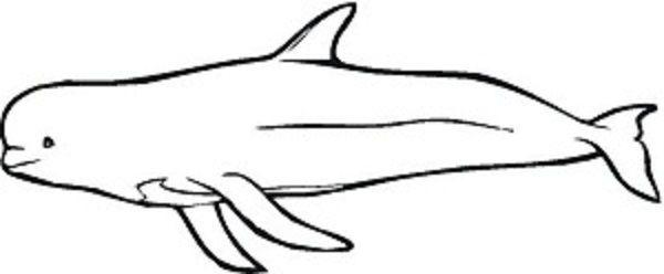 beluga whales coloring pages (Dengan gambar)