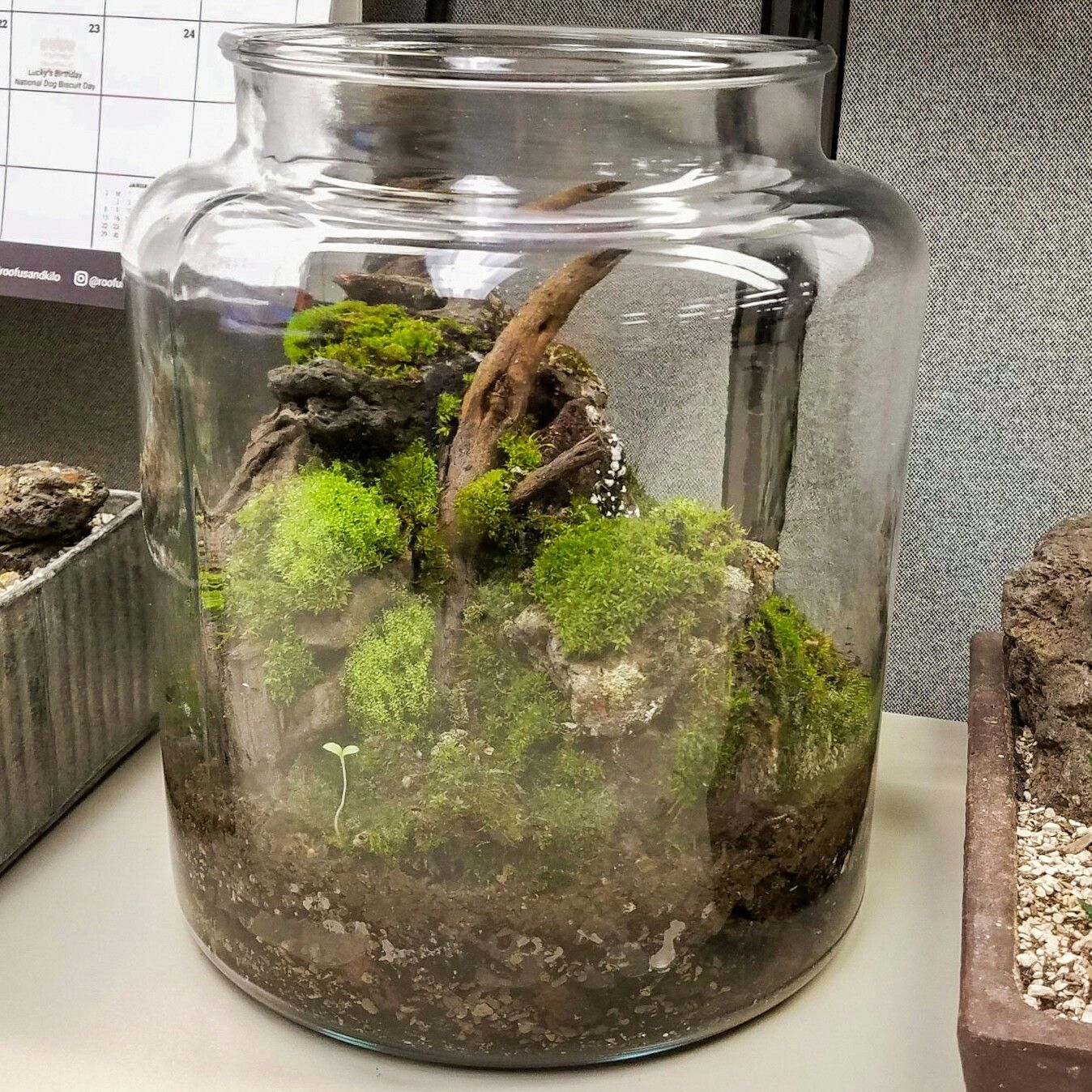 Working On My First Attempt At A Desktop Cookie Jar Terrarium With
