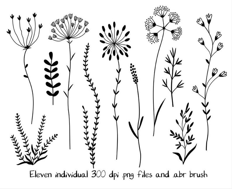 Wildflowers Clipart And Stamps Digital Clipart Clip Art Flowers Digital Brushes Digital Graphics Digital Clip Art Wildflower Drawing Flower Clipart Images