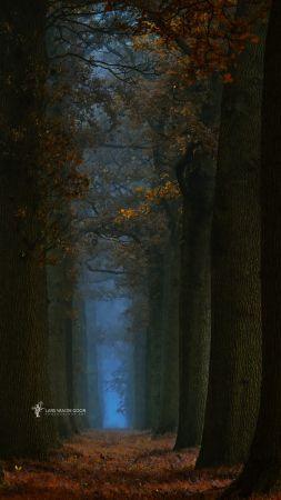 Path of Few by Lars van de Goor