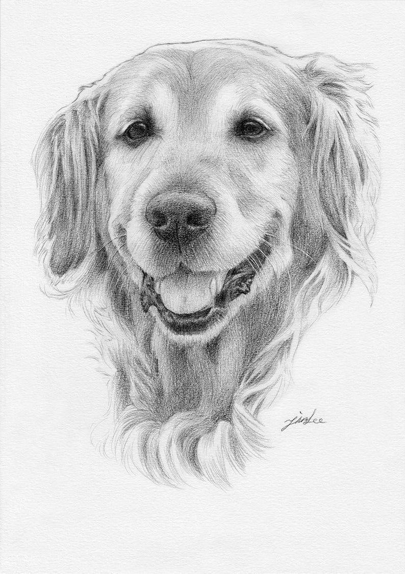 Custom Portrait Pet Portrait Drawingdog Cat Etc Etsy Dog Pencil Drawing Pencil Drawings Of Animals Golden Retriever Drawing [ 1125 x 794 Pixel ]