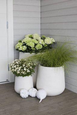 Photo of These flowers stay beautiful all fall – Deko Vor Der Haustür Ideen,  #Beautiful #Deko #der #d…