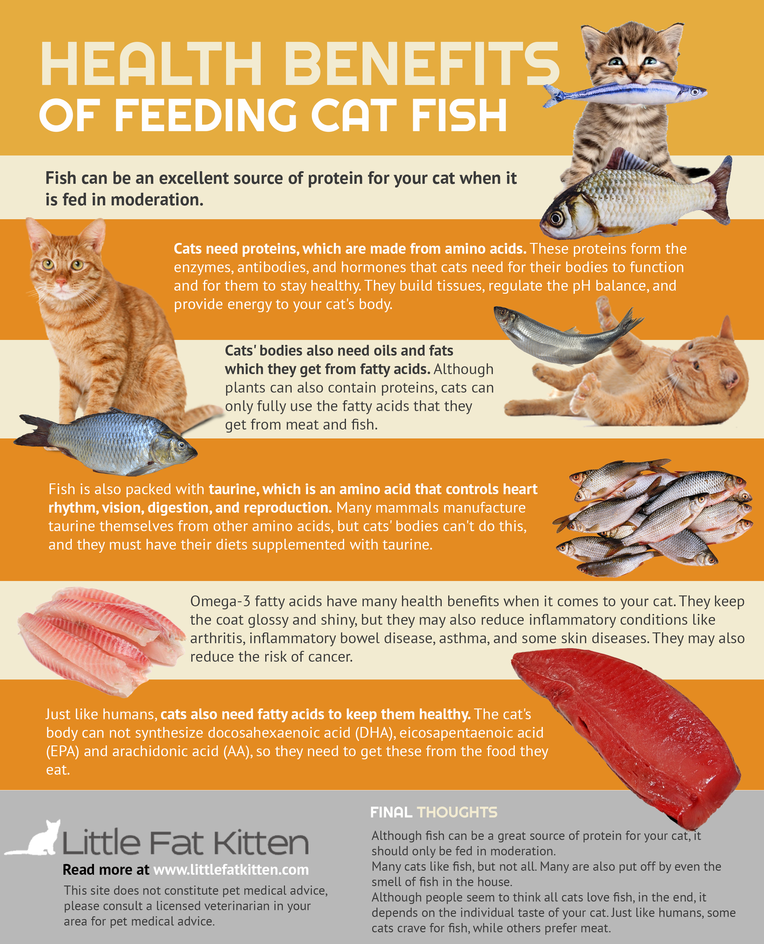 Pin On Cat Infographics