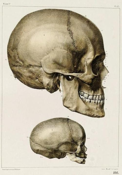 skull - adult and infant | Drawing Reference (human) | Pinterest ...