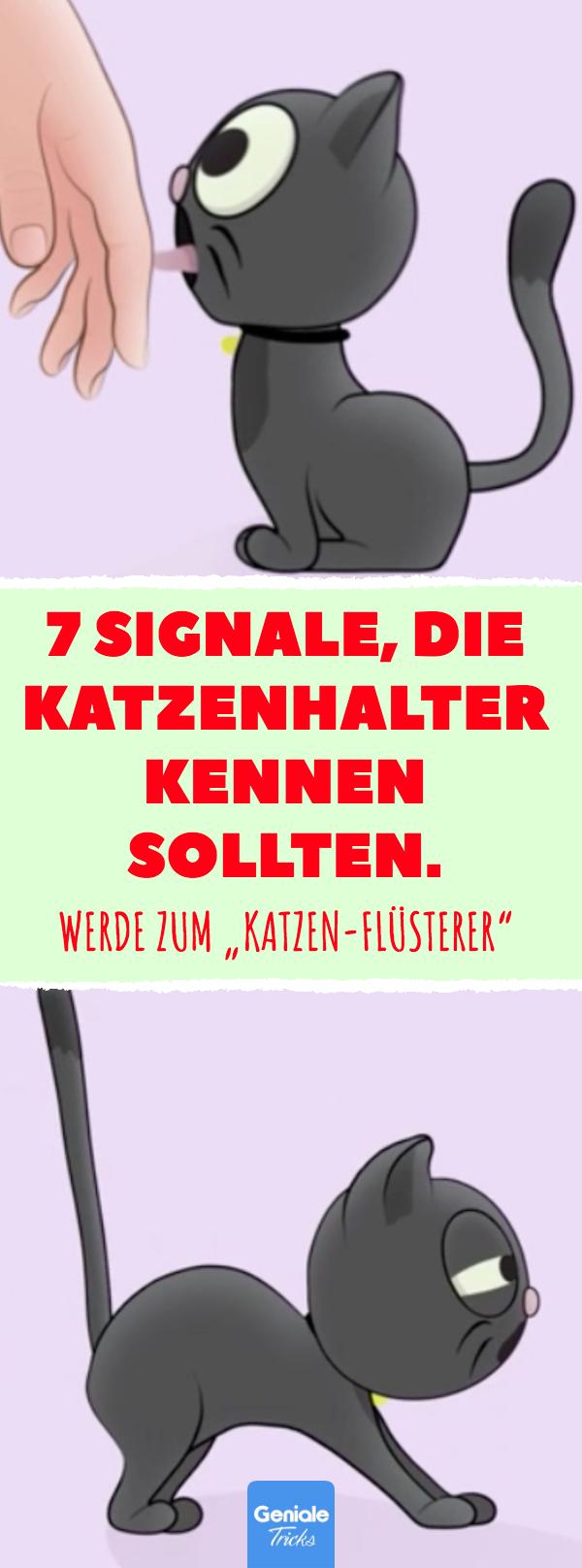 """7 Signale, die Katzenhalter kennen sollten. Werde zum """"Katzen-Flüsterer"""". Körpersprache und Verhalten: 7 Signale von Katzen, die Besitzer kennen sollten. Achte auf die Signale! #katzen #körpersprache #verhalten #signale #haustiere #tiere #wissen #katzengeburtstag"""