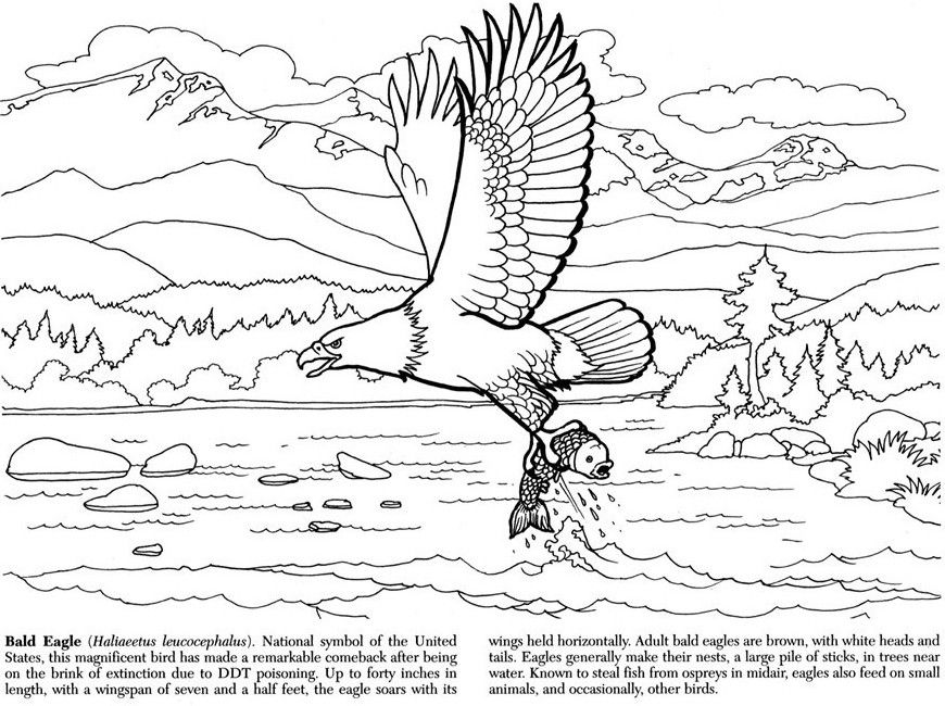 alaskan wildlife coloring book dover publications coloring pages first edition pinterest. Black Bedroom Furniture Sets. Home Design Ideas