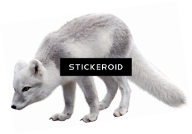 Arctic Fox Png Image With Transparent Background Png Free Png Images Arctic Fox Arctic Png