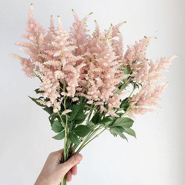 The Loveliest Astilbe Astilbemyheart Blumen Blumenstrauss Rosafarbene Bluten Liebe Blumen