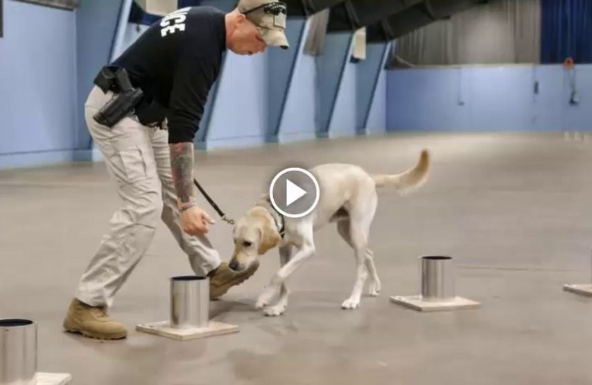 10 Things You Should Know About Dog Training In 2020 Dog