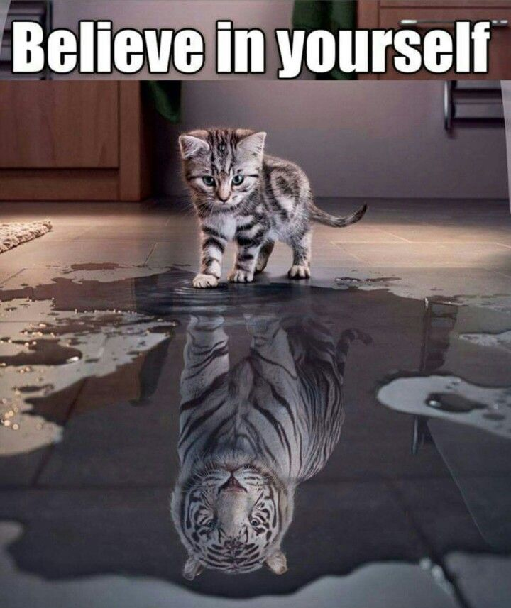 Believe In Yourself Quotes: Quotes & Other Funny S