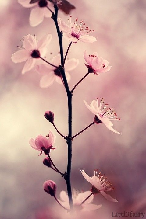 .Great photo to decorate your Shabby Chic living room.