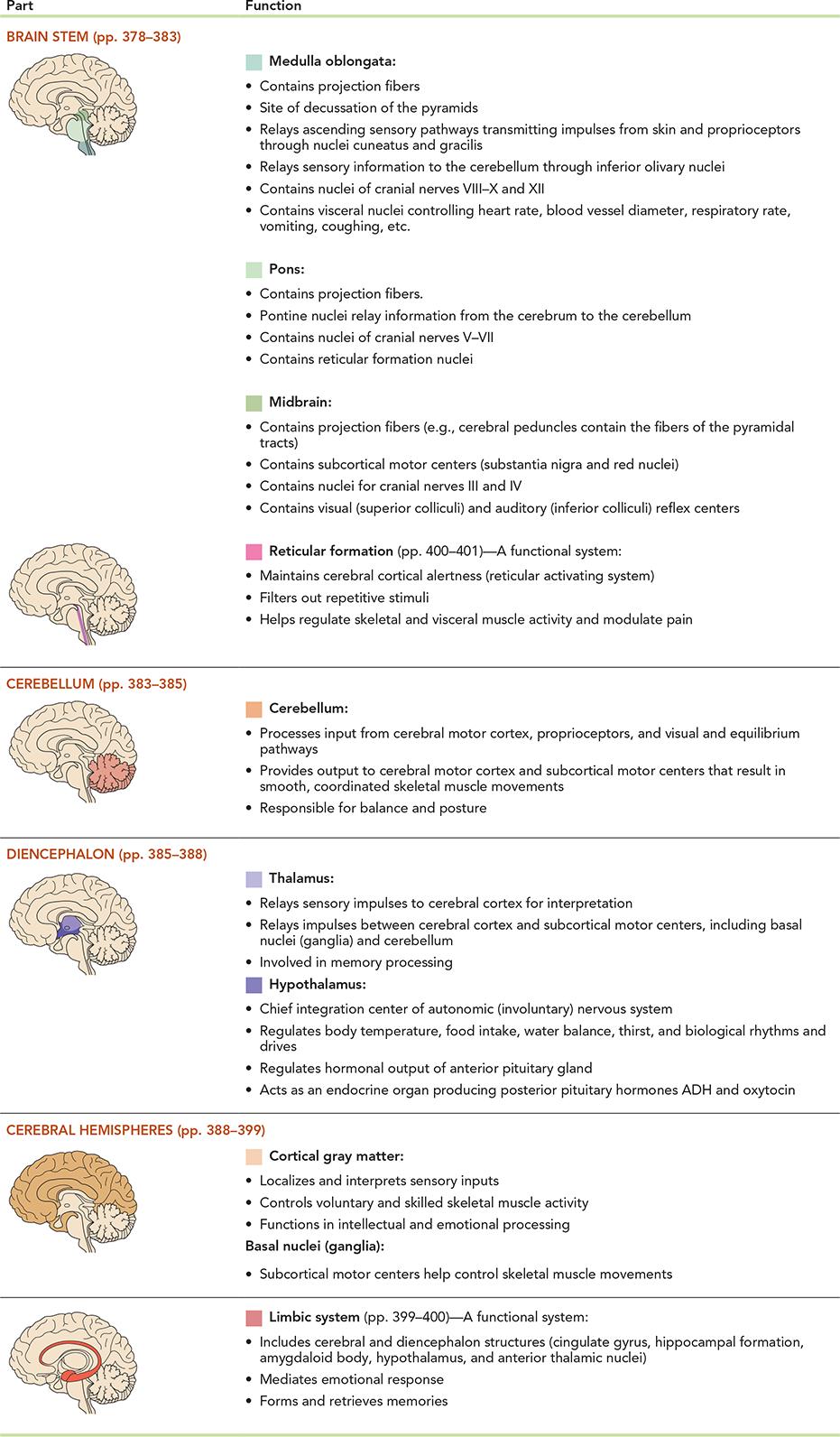 The Brain | Anatomy | Pinterest | Anatomy and Brain