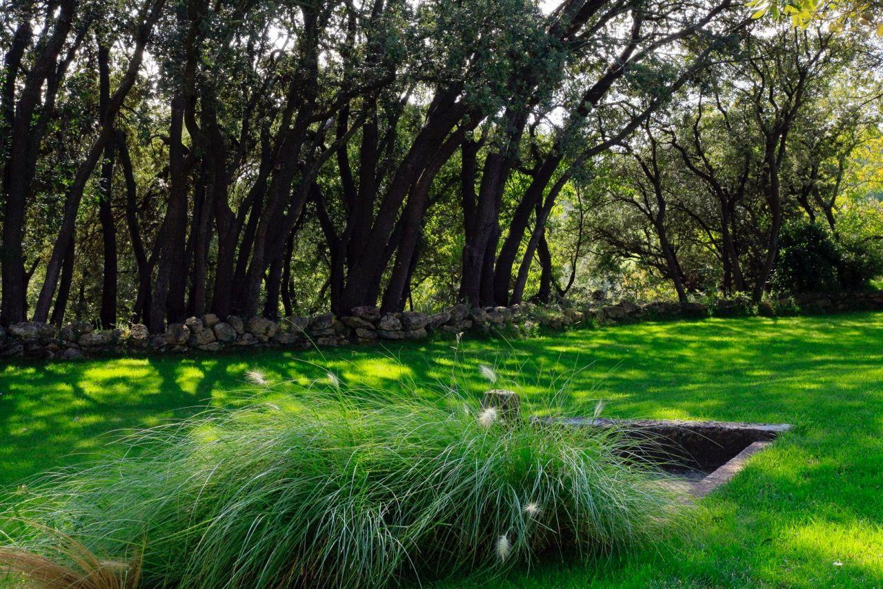 Jardin minimaliste avec piscine et terrasse en provence con u par les paysagistes conceptuelles - Plantes bassin de lagunage aixen provence ...