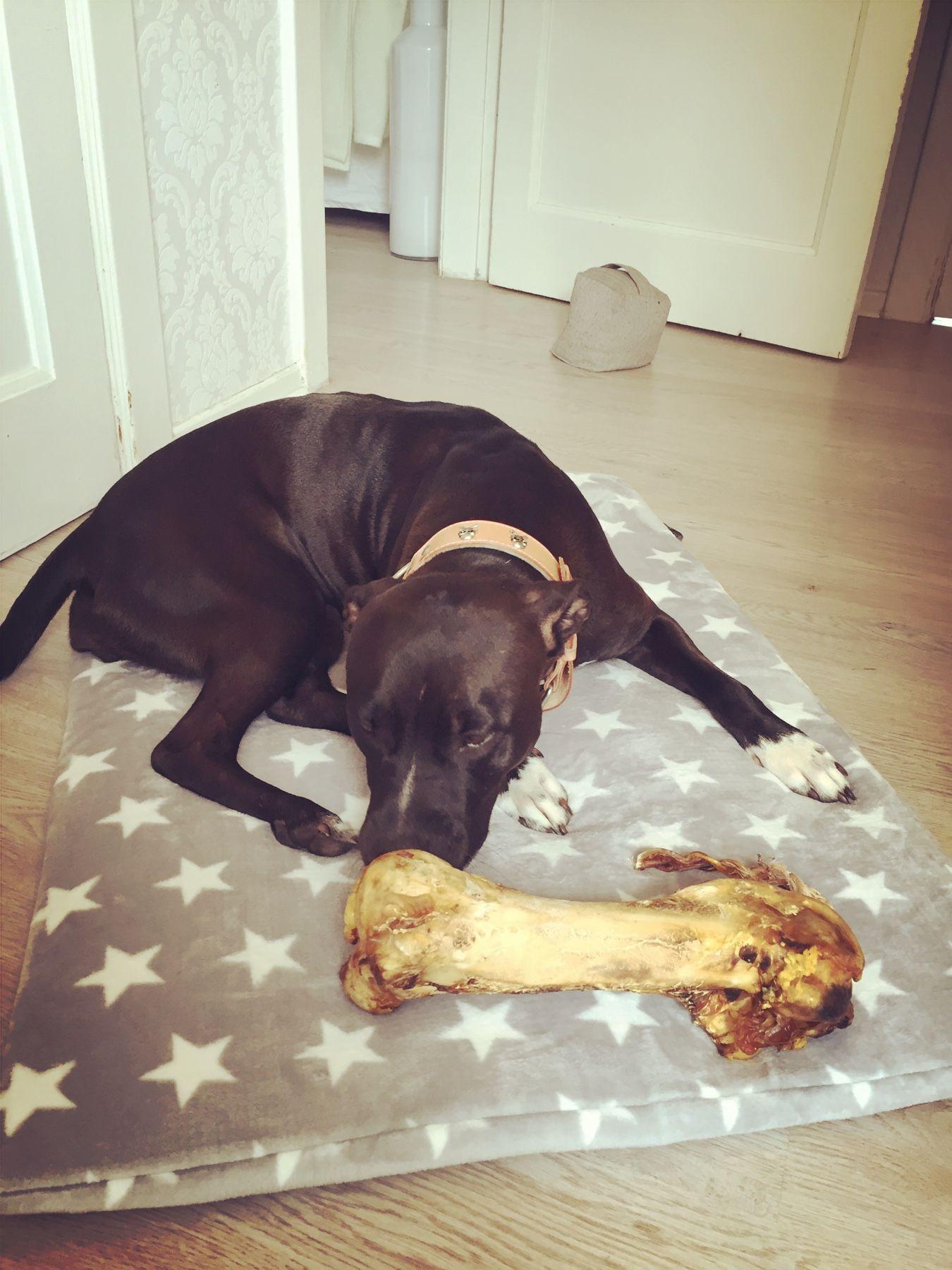 my dog´s eating a huge ostrich bone