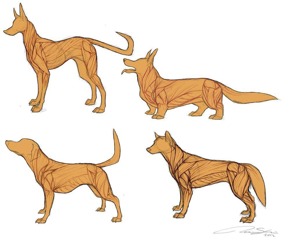 dog anatomy - Google Search | Drawing Anatomy | Pinterest | Dog ...