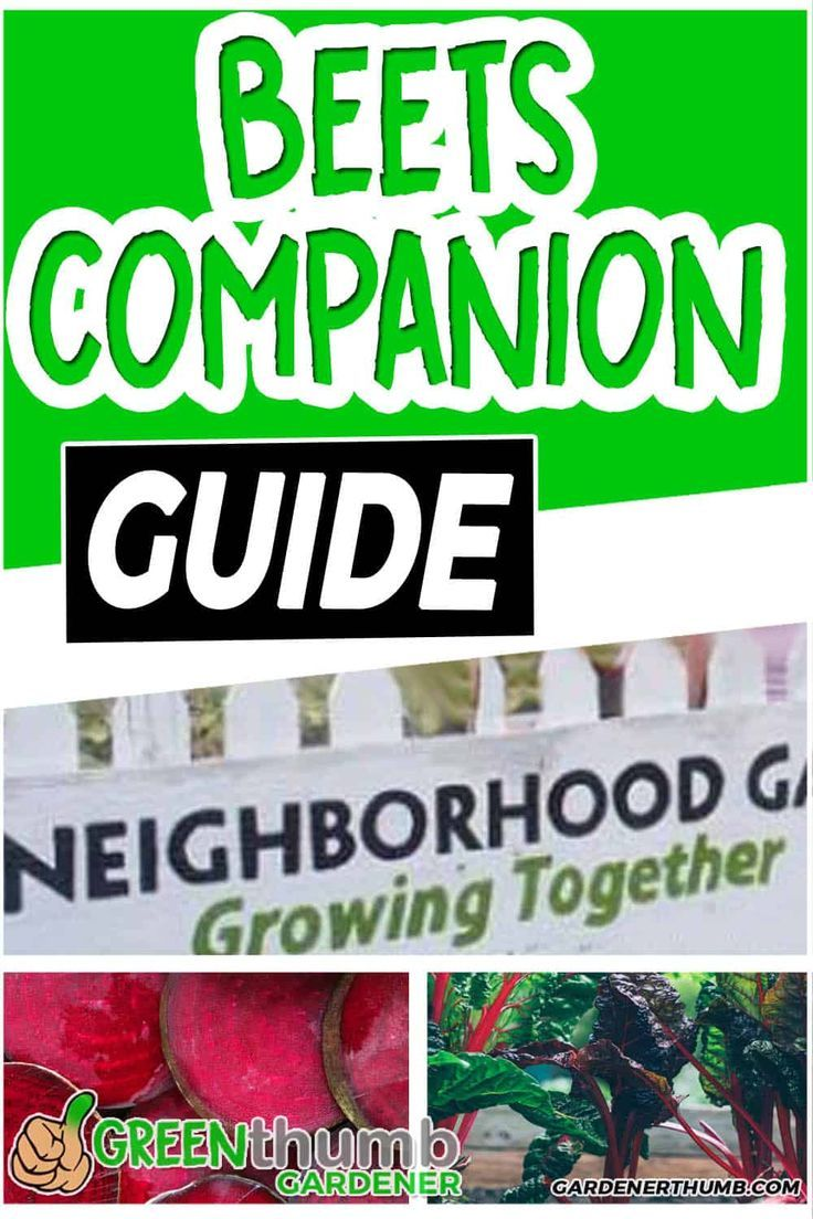 Beets Companion Planting Is A Really Simple Technique That 400 x 300
