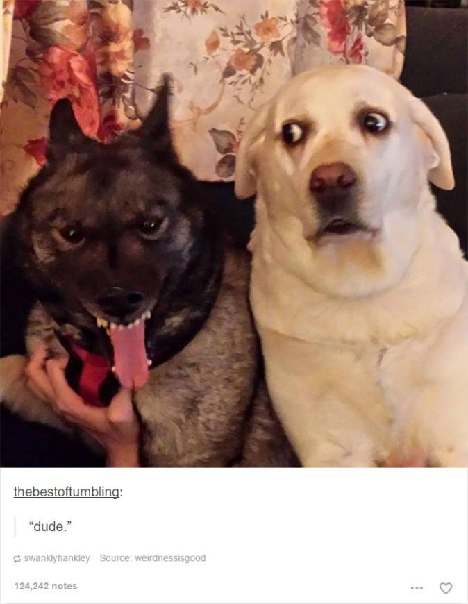 24 Dog Posts On Tumblr That Are Impossible Not To Laugh At Funny