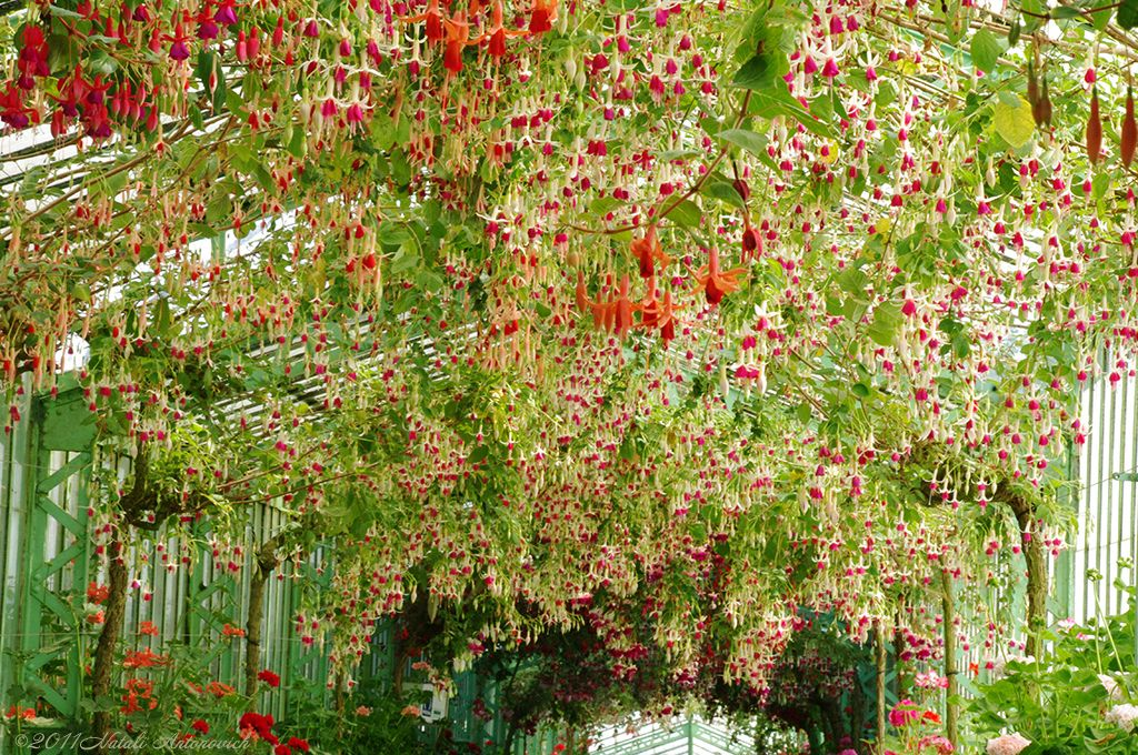 https://flic.kr/p/bMgQ4z | Royal Greenhouses | Royal Greenhouses