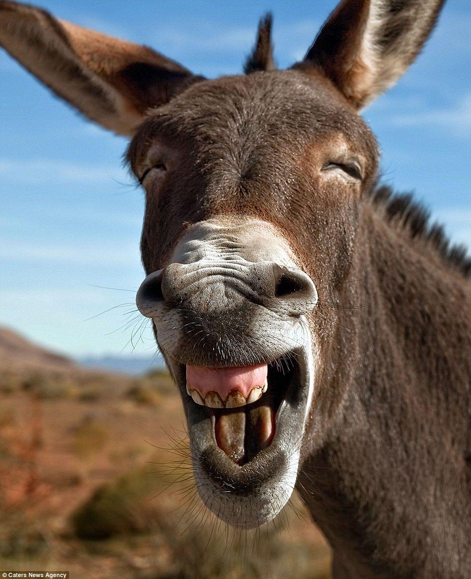 Donkey ass super