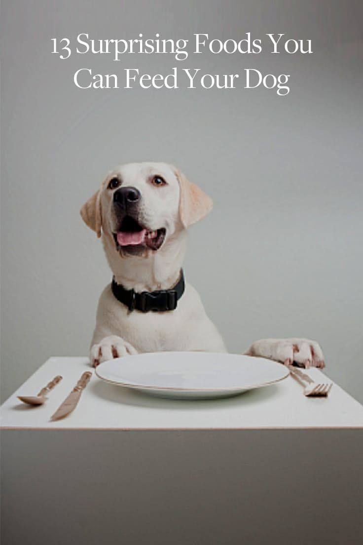 13 Surprising Foods You Can Feed Your Dog  via @PureWow