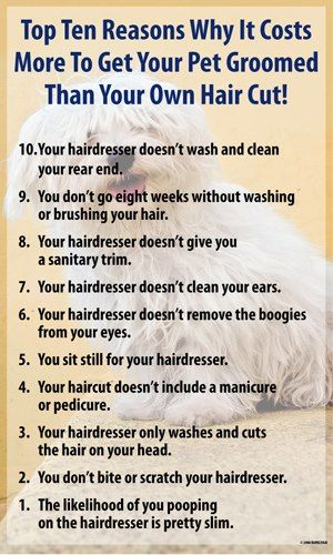 Top Ten Reasons Why It Costs More To Get Your Pet Groomed Than Your Own Haircut Dog Grooming Salons Pet Grooming Salon Dog Groomers