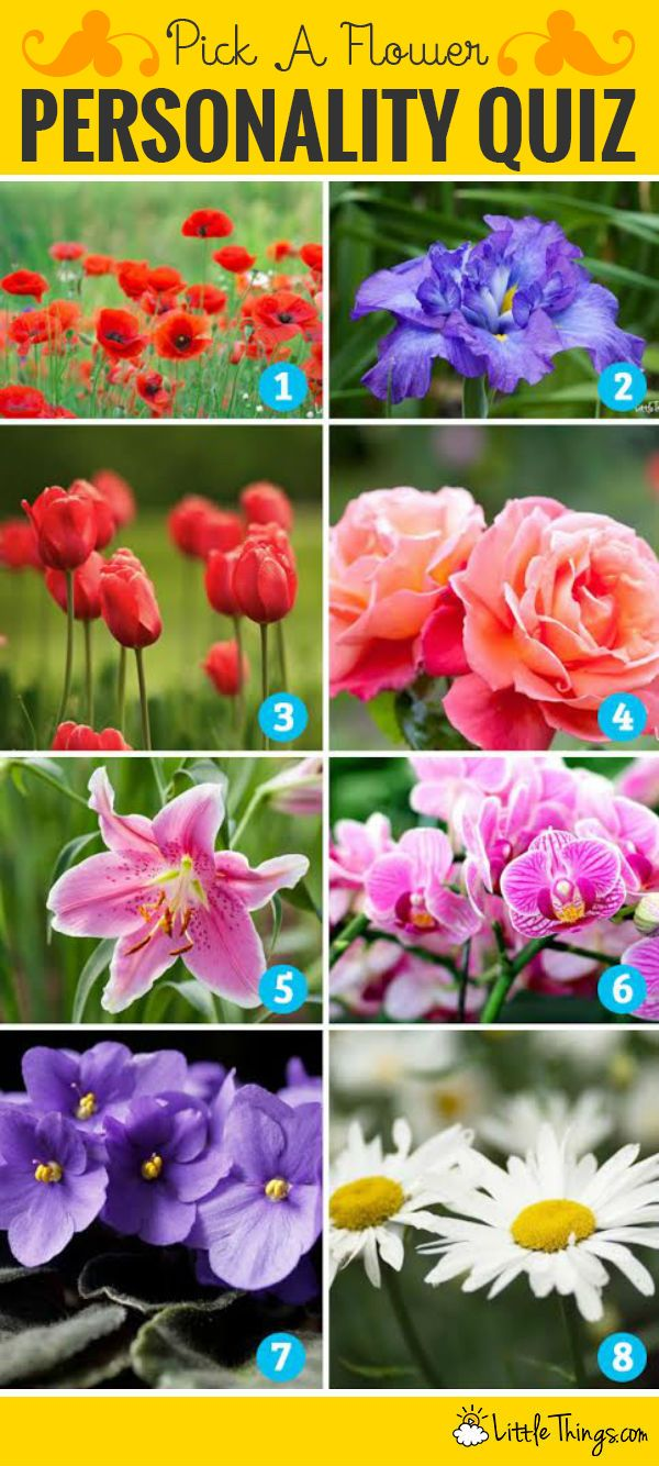 Which Flower S Your Favorite It Actually Reveals This Secret Information About Yourself Birth Month Flowers Flowers Flower Chart