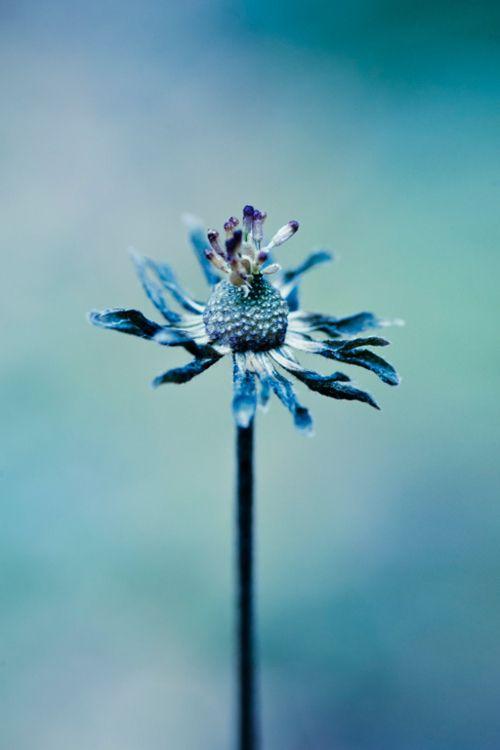 Cantiknya Bunga Berwarna Biru Biru Warna Dan Objek Gambar