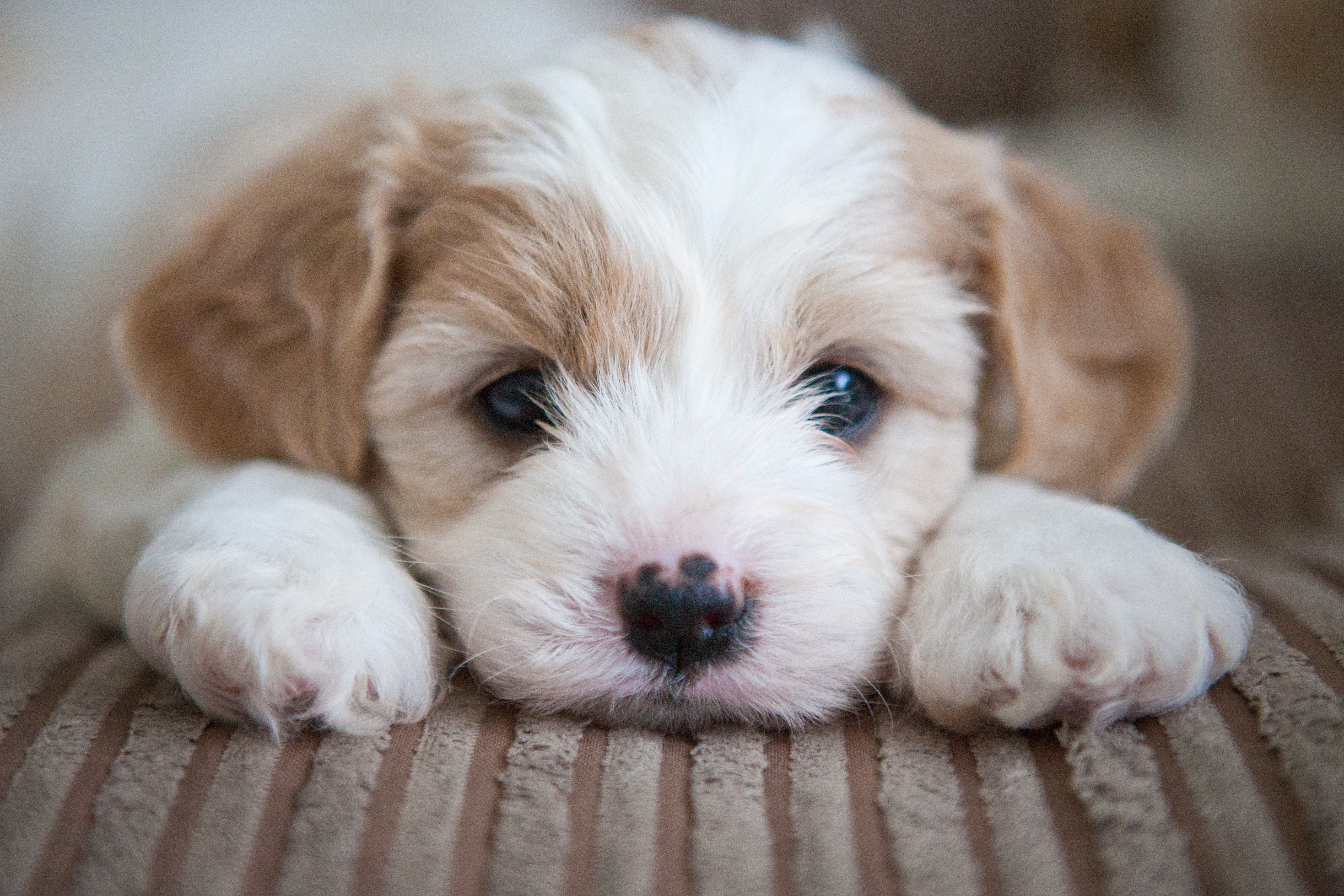 Puerto rican puppy tests positive for bacterial infection new top story from time jamie ducharmepuppies rescued from puerto rico may have infection that solutioingenieria Choice Image