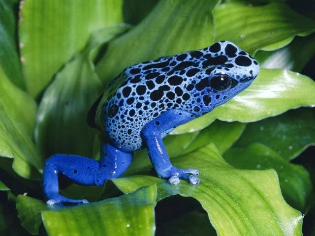 Amazon Rainforest Animals Amazon Rainforest Animals The Amazon