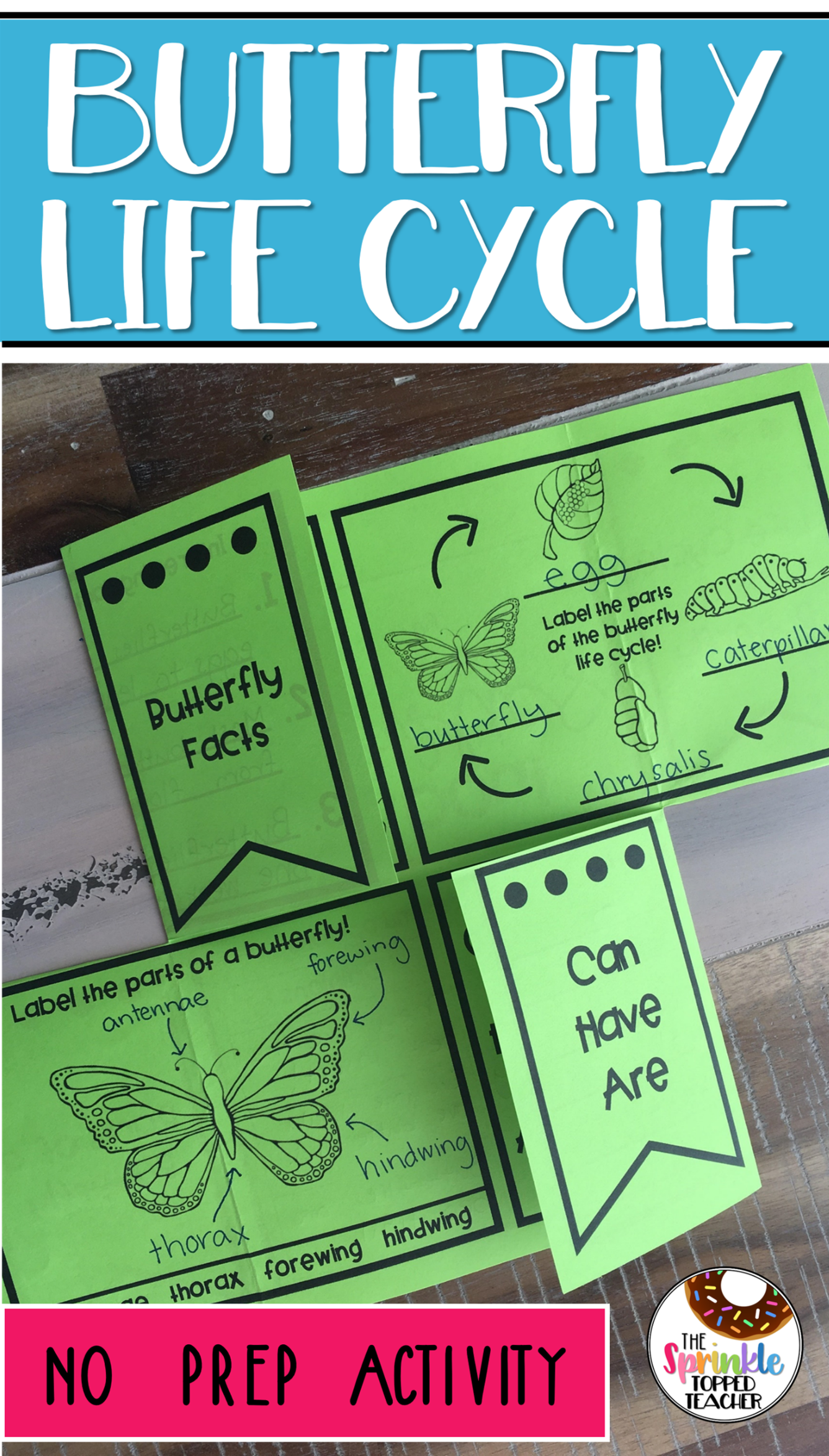 Butterfly Life Cycle Research Project