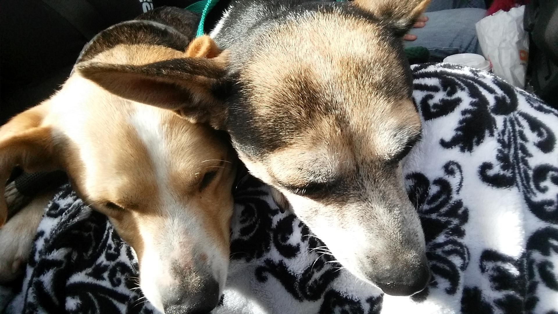 Bambi and Boo Boo need a home…together!!! 100+ Abandoned