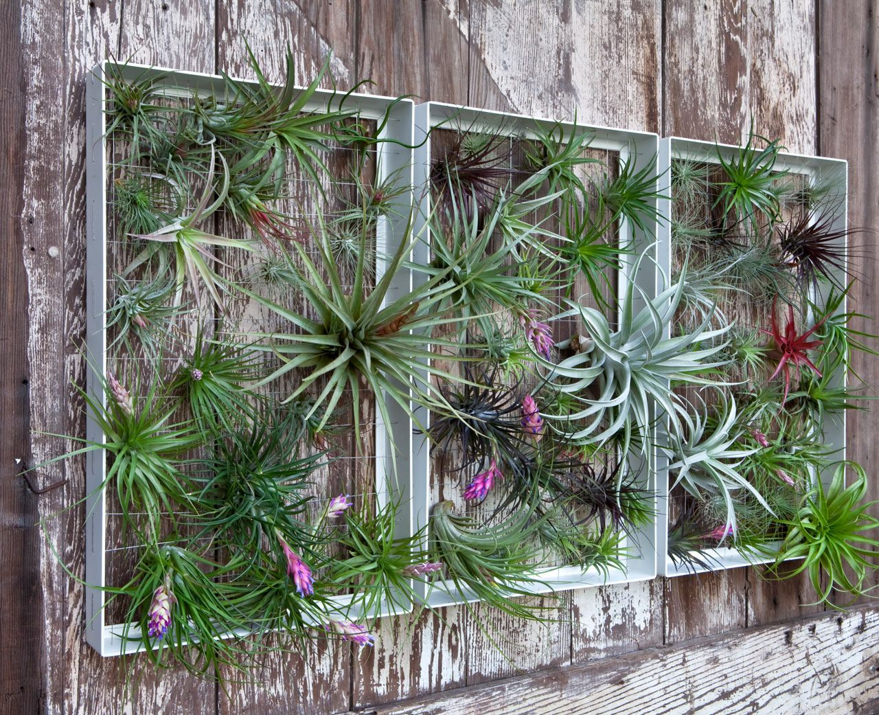 Rustic outdoor display focal point in the garden of air plants! outdoor-wall -