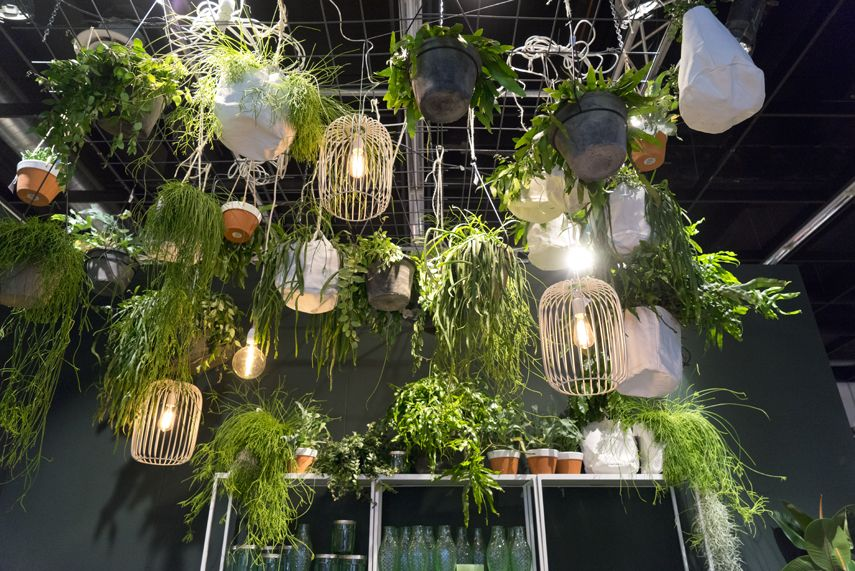 Trend Urban Jungle : Plant trends from imm 2017 in cologne millenials trends