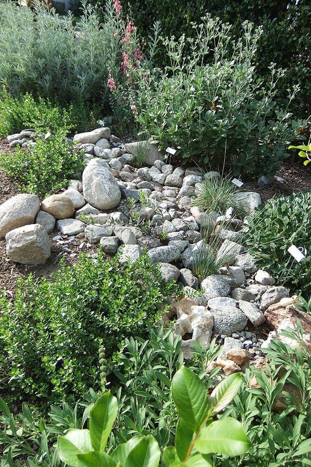Garden 26 In Valley Glen | Theodore Payne Native Plant Garden Tour