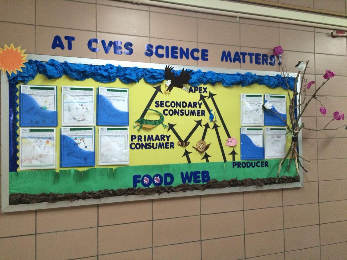 Science bulletin board, food web