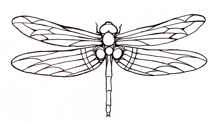 Dragonfly Dragonfly Tattoo Dragonfly Drawing Dragonfly Art Dragonfly Tattoo