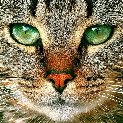 tabby cat potrait with green eyes by COLORFUL on ...