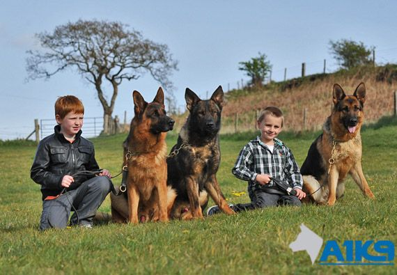 A1k9 Dogs And Children Trained Family Protection Dogs Security