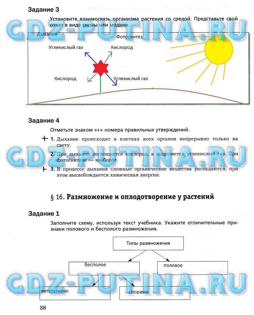 Взаимосвязь организма растения со средой схема фото 623