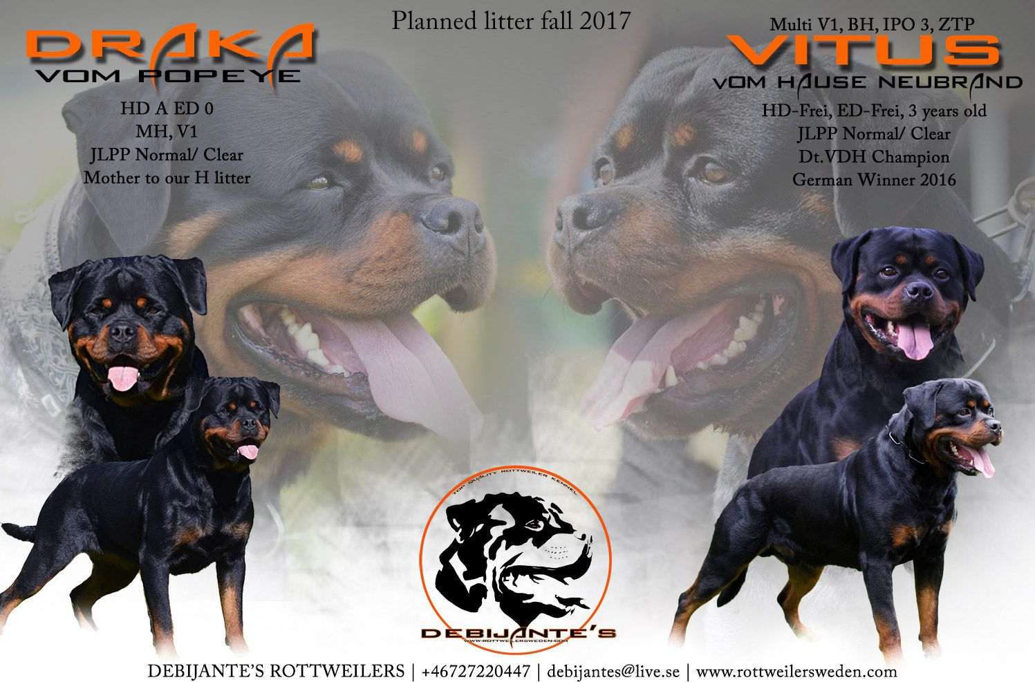 Planned Litter For The Fall Of 2017 Draka Vom Popeye X Vitus Vom