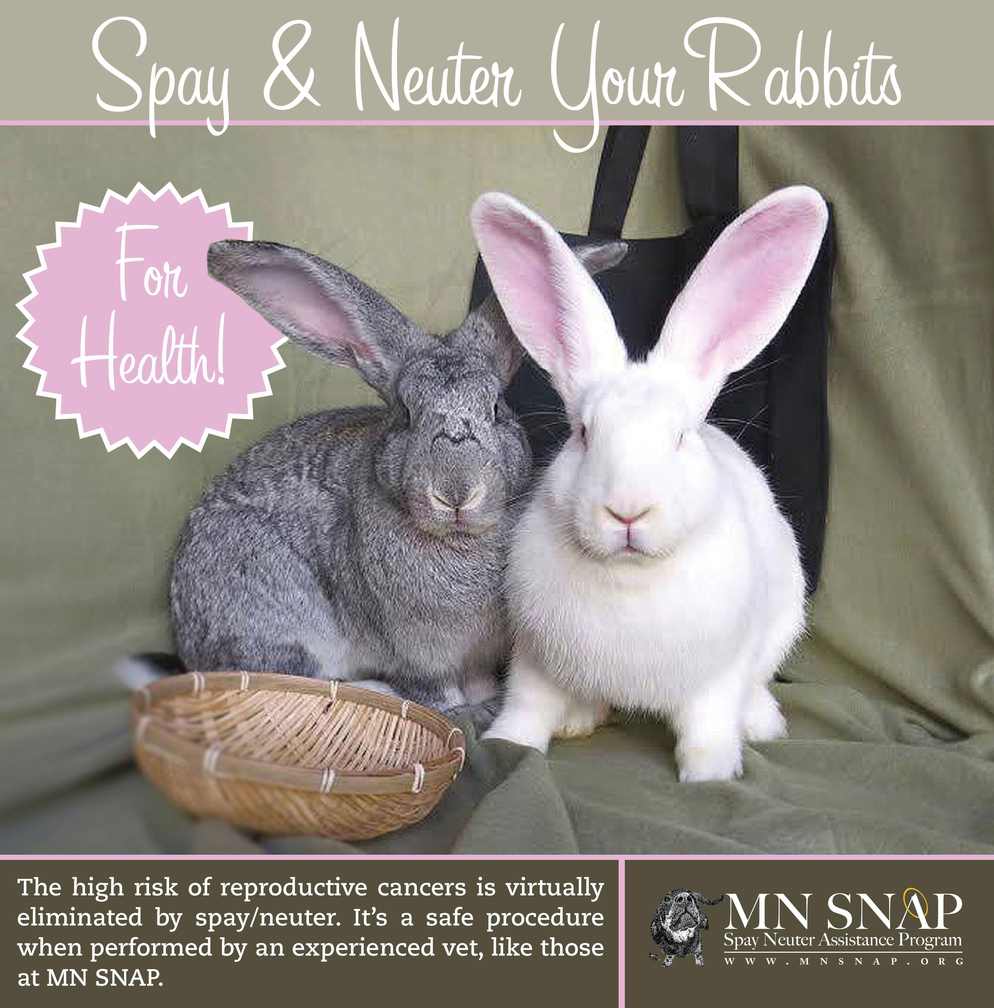 Minnesota Spay Neuter Assistance Minnesota Spay Neuter Assistance Program Adopt A Bunny Female Rabbit Bunny Care