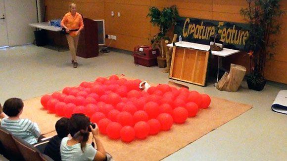 (Vídeo) Récord mundial: perra estalla 100 globos en segundos