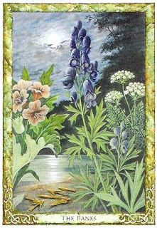 The Banes ( Wolfsbane - Henbane - Hemlock ~ Conuim maculatum ) - Druid Plant Oracle by Stephanie Carr-Gomm, Philip Carr-Gomm, Will Worthington